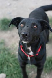 Bujorel - ein schwarzer Traumhund