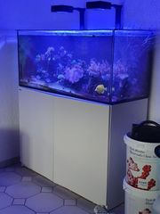 Meerwasseraquarium RedSea Reefer 350 Deluxe