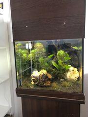 Aquarium 40er Würfel 60l