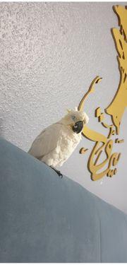Kakadu papagei