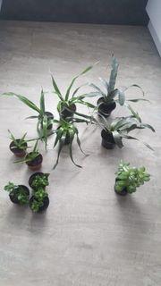 Verschiedene Zimmerpflanzen günstig weiterzugeben