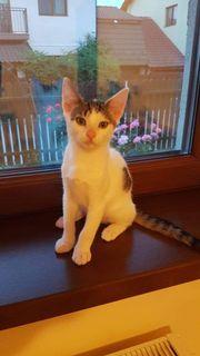 Katzenmädchen Elsa sucht liebevolles Zuhause