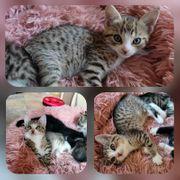 Kitten Baby Katze Miri geimpft