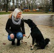 Professionelles Hundetraining mobil
