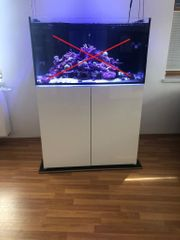 Meerwasseraquarium Aqua Medic 375 XD -