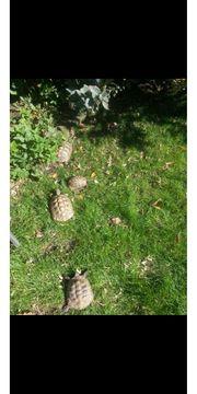 Artgerechtes Zuhause für Landschildkröten