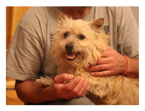 Tierschutzhund - Benji -