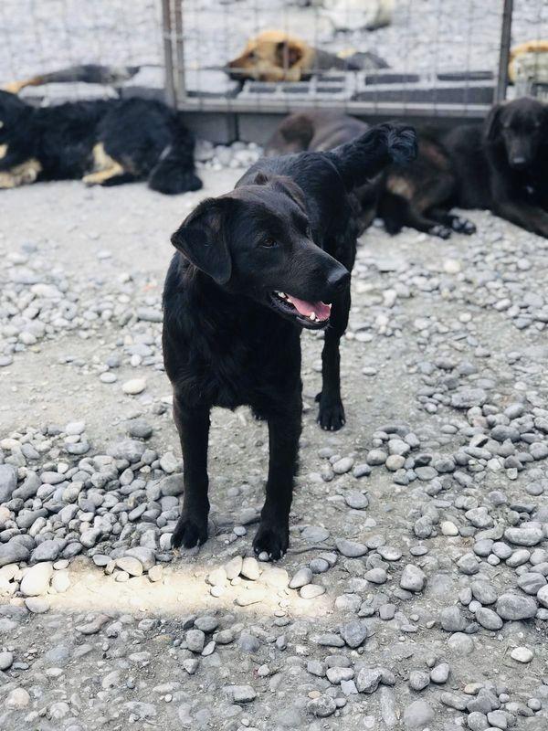 Hund aus Tierschutz