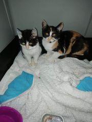 Katzenmädels Tinka Lucy suchen ein