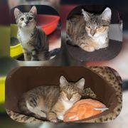 Katze Benita sucht ihr Zuhause