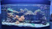 Meerwasseraquarium Aqua Medic Percula 120