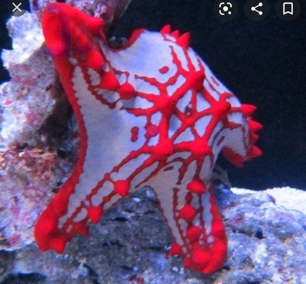 Seestern Meerwasser korallen tausch möglich