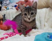 Estelle - - süßes Tigerchen sucht Zuhause