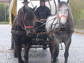 Pferde - Gespann Arbeitspferde