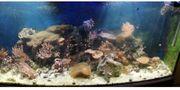 Meerwasser Aquarium Seewasser Aquarium Lebendgestein