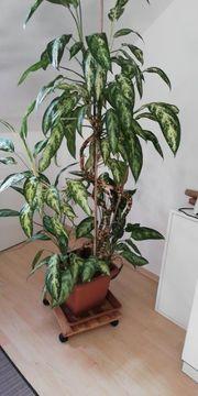 Grosse Pflanze