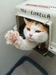 Katze Peca sucht ihr Zuhause