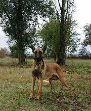 Tierschutzhund - Bobby -