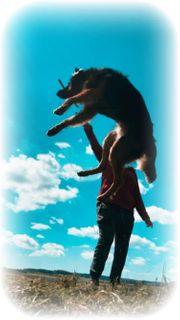 hundebetreung Hundesitter