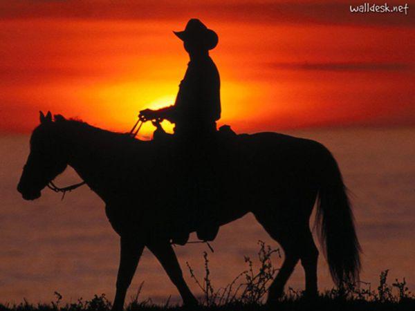 The Horseman - Von den Pferden