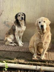 Älteres Hunde-Duo sucht ein zu