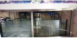 Meerwasseraquarium 800L: Kleinanzeigen aus Nürnberg - Rubrik Fische, Aquaristik