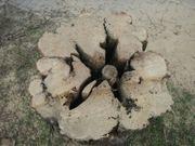 Baum-Gutachten Baumkontrolle Verkehrssicherheitsgutachten