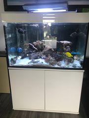 Meerwasseraquarium 400l mit Besatz