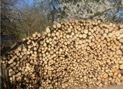 Brennholz Buche sortenrein