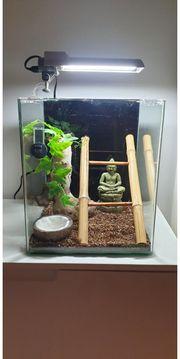Cube Terrarium mit selbstgebautem Gaze