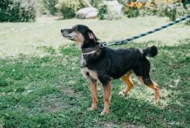 HUGO - ist sehr menschenfreundlich liebt: Kleinanzeigen aus Rabenau - Rubrik Hunde