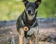 Billa - Traumhund sucht Traumzuhause