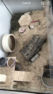 Hamster Nager Terrarium