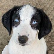 Mickey Blue Eyes geb ca