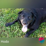 Hodo - Open the Door