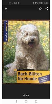 Buch Bachblüten für Hunde