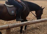 Suche Selbstversorgerstall zur Pferdehaltung