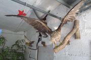 9 Vogel Präparate von 10
