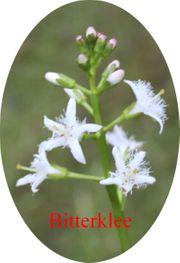 Biete Verschiedene Wasserpflanzen Blumen