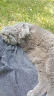 Katze sucht dringend zuhause für
