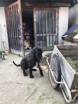 AMINO ist momentan noch etwas: Kleinanzeigen aus Overath - Rubrik Hunde