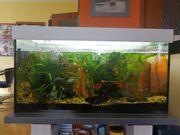 Aquarium 200 Liter inkl Pumpe
