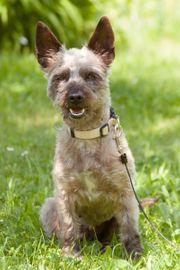 Dalia 4 Jahre - Mischling - Tierhilfe