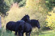 Pferdepension Schneeburg - Einstellerplätze frei Stall