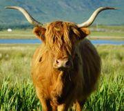 Urlaubsbegleitung nach Schottland gesucht
