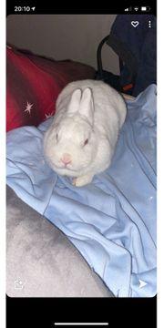 Kaninchen suchen Dringend ein neues