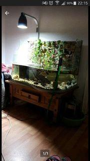 Aquarium Lucky Reptile mit Rückwand