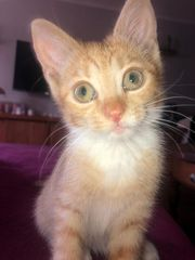 Baby Katze Rübe 10 Wochen