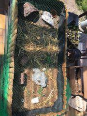 Nachzuchten griechische Landschildkröten
