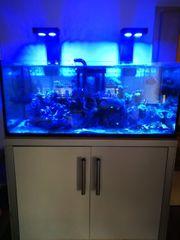 Meerwasseraquarium wegen Hobbyaufgabe mit viel